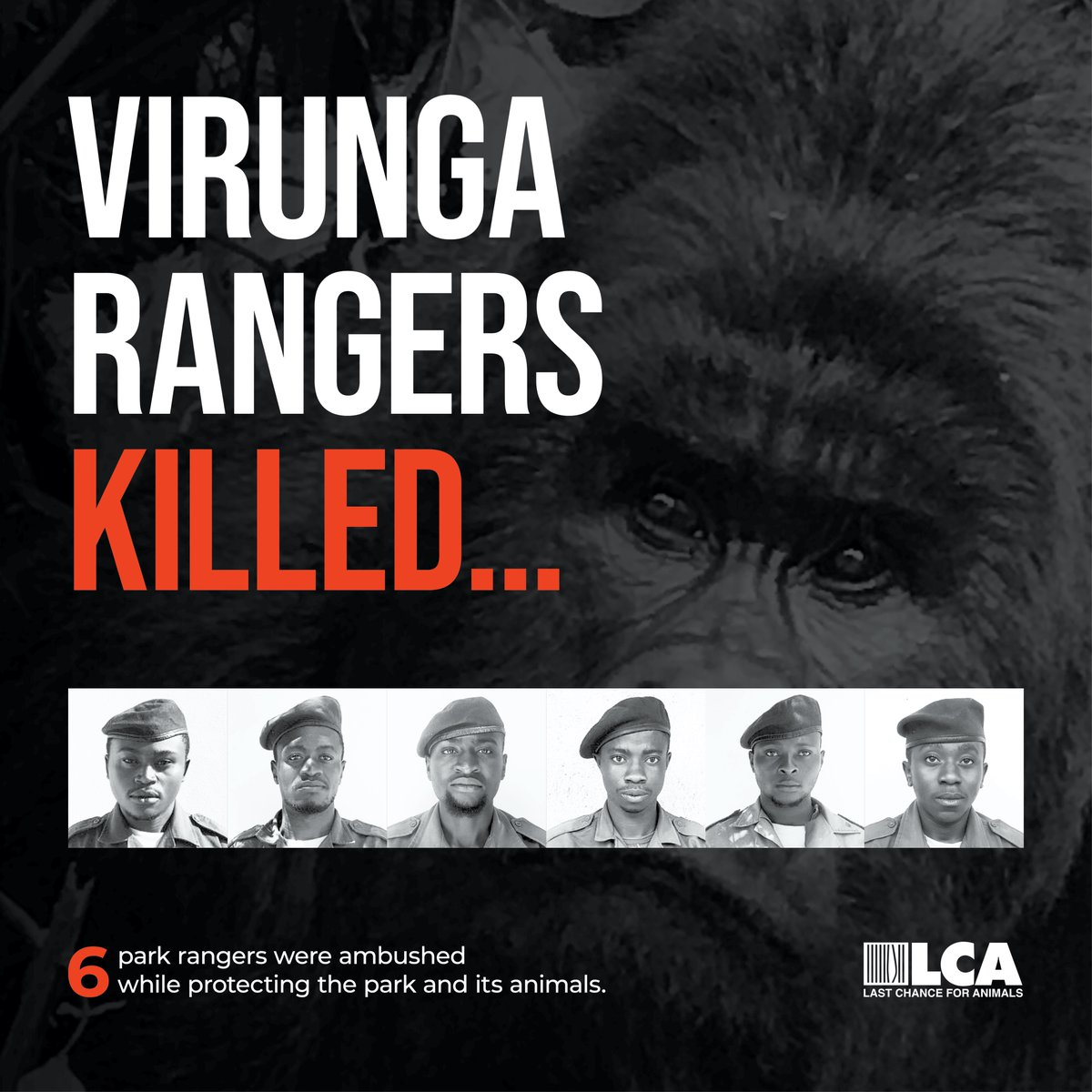 💔 LCA is heartbroken and condemns the killing of six rangers at Virunga National Park in the Democratic Republic of Congo. Find out more here:  Learn more about LCA's support of Virunga National Park: