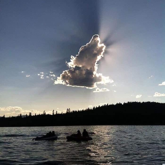 Replying to @Perroslovers: Todos los perritos se van al cielo 🐶