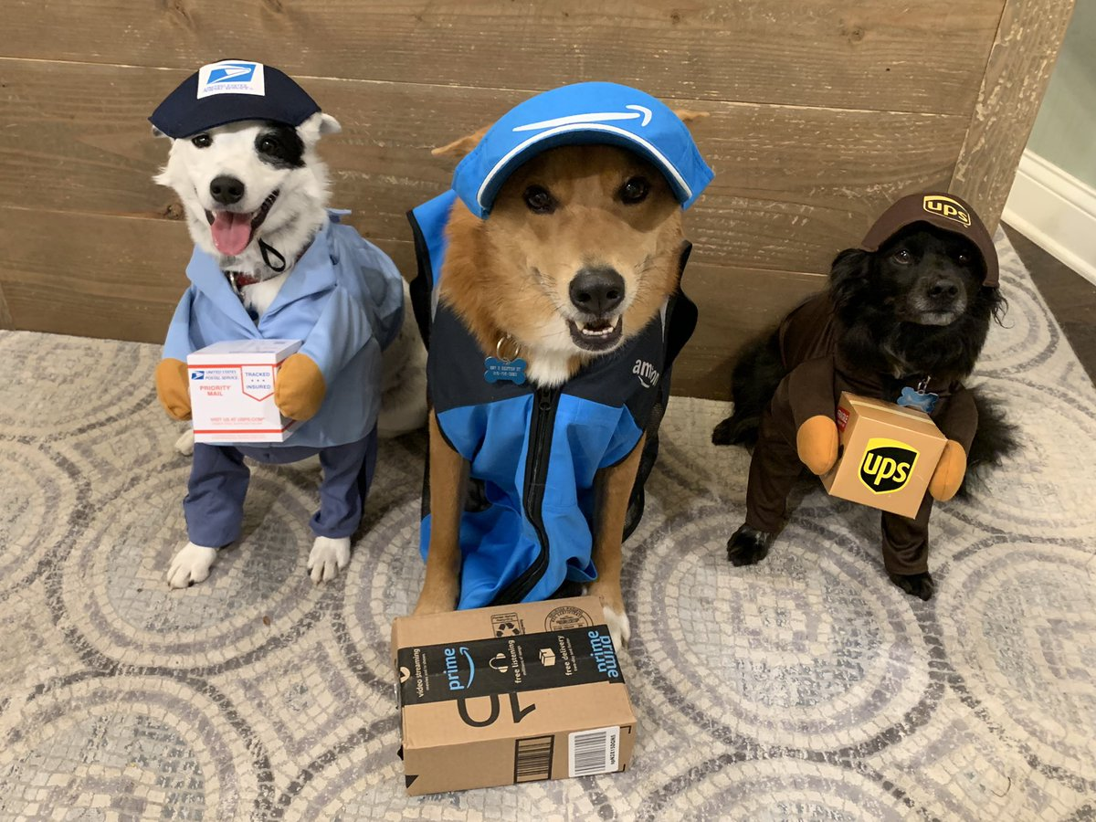 @PawOriginal Pongo, Carson, and Mason: the delivery dogs!