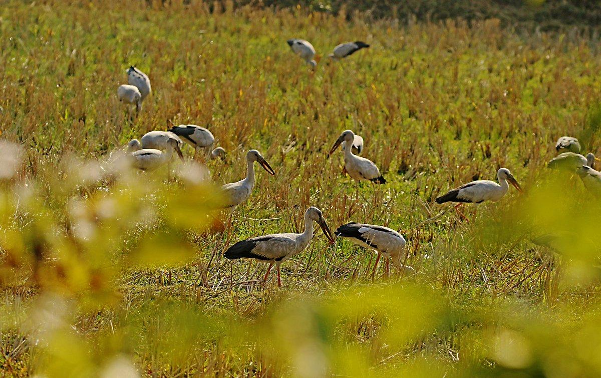 Open bill ... @IndiAves @Avibase #birds #birdphotography #birdwatching #IndiAves https://t.co/EbOetNtu1A