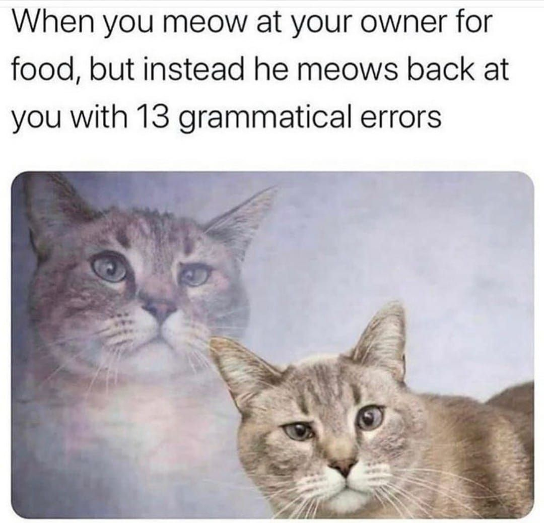 Must improve your grammar meow  #meowed #meowedofficial #themeowedclub