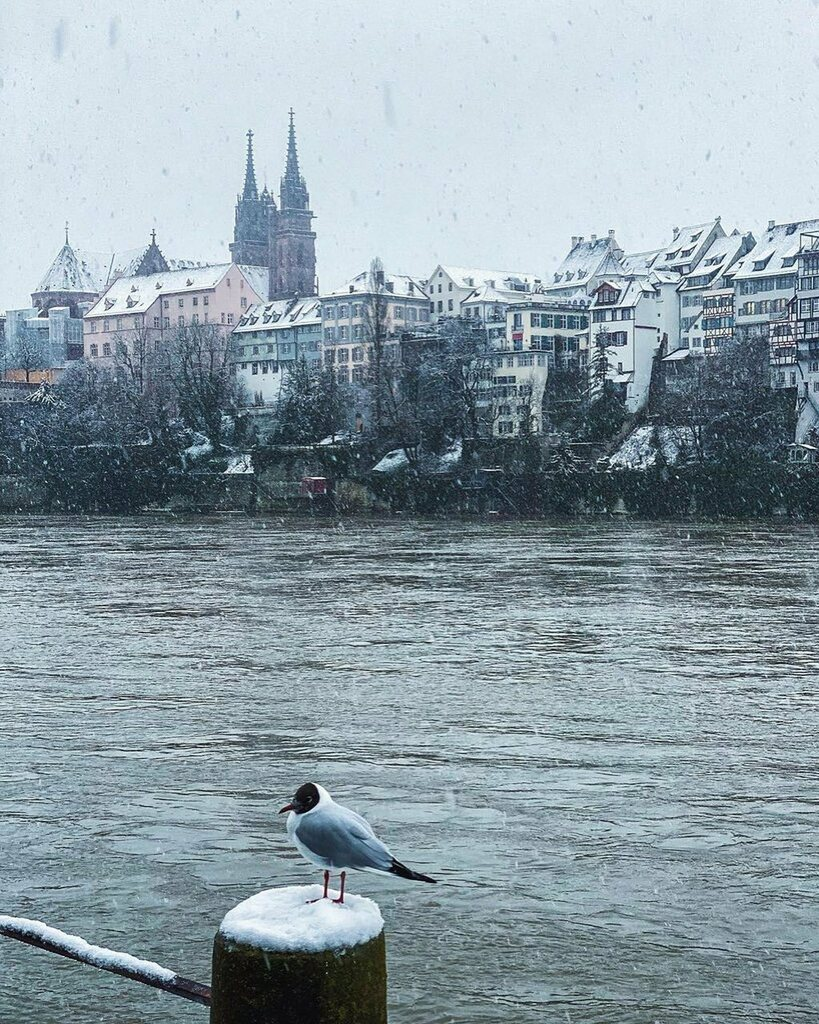 The seagull is also waiting for the longed-for weekend😃⏳. Enjoy your snowy day!🤗❄️ All credits for these shots go to @girlinbasel.👍 #lovebasel  • • • #baselswitzerland #basel #inlovewithswitzerland #instatravel #travelgram #blickheimat #citybestp…