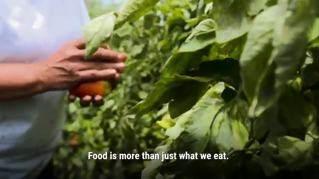 Food touches every aspect of our lives. ✨💦🌱  By improving the way we produce 🌱, process 🏭 , transport 🚚 and consume food 🍙 we can build a more just and resilient world. Where no one is hungry, no one is poor and no one is left behind.  Learn more about #foodsystems 🌏