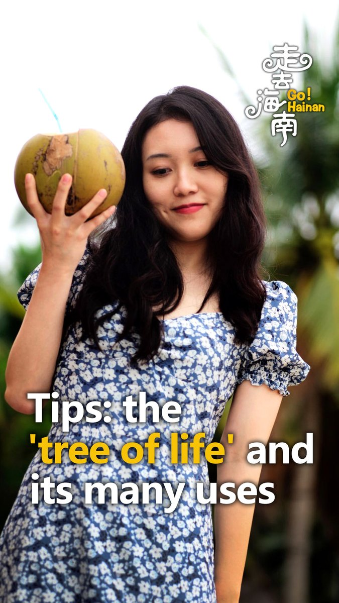 "#GoHainan: The ""tree of life"" and its many uses"