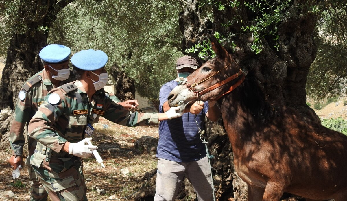 #DidYouKnow? Peacekeepers provide medical support not only to humans, but also to animals.   Agricultural communities and farmers within conflict-prone areas rely on the livelihood of their cattle.  Healthier animals ➡️ more peace! 🐴🐂✌️#A4P @UNIFIL_