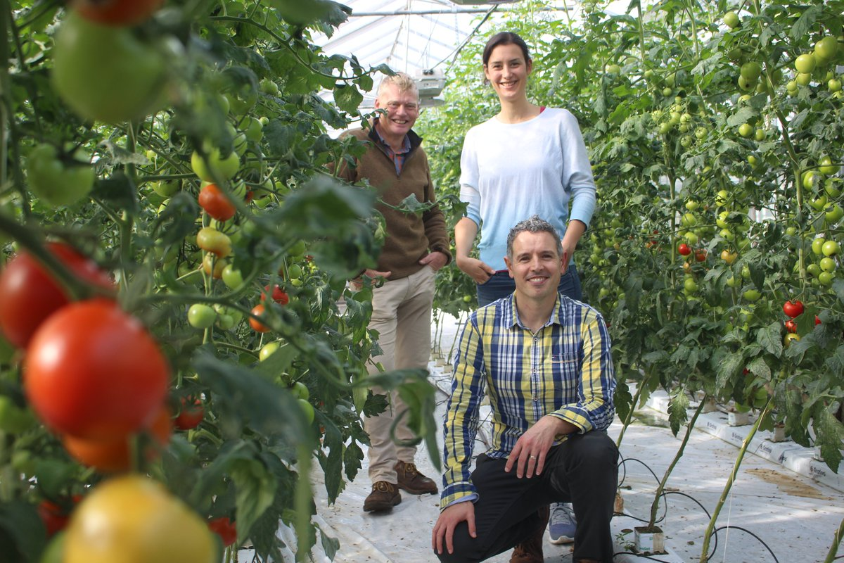 Meet David Benito-Alifonso and Imke Sittel- they're making photosynthesis more efficient- so more tomatoes on less land.  They're our latest carbon-cutting heroes on #39Ways  @bbcsounds @BBCRadio4