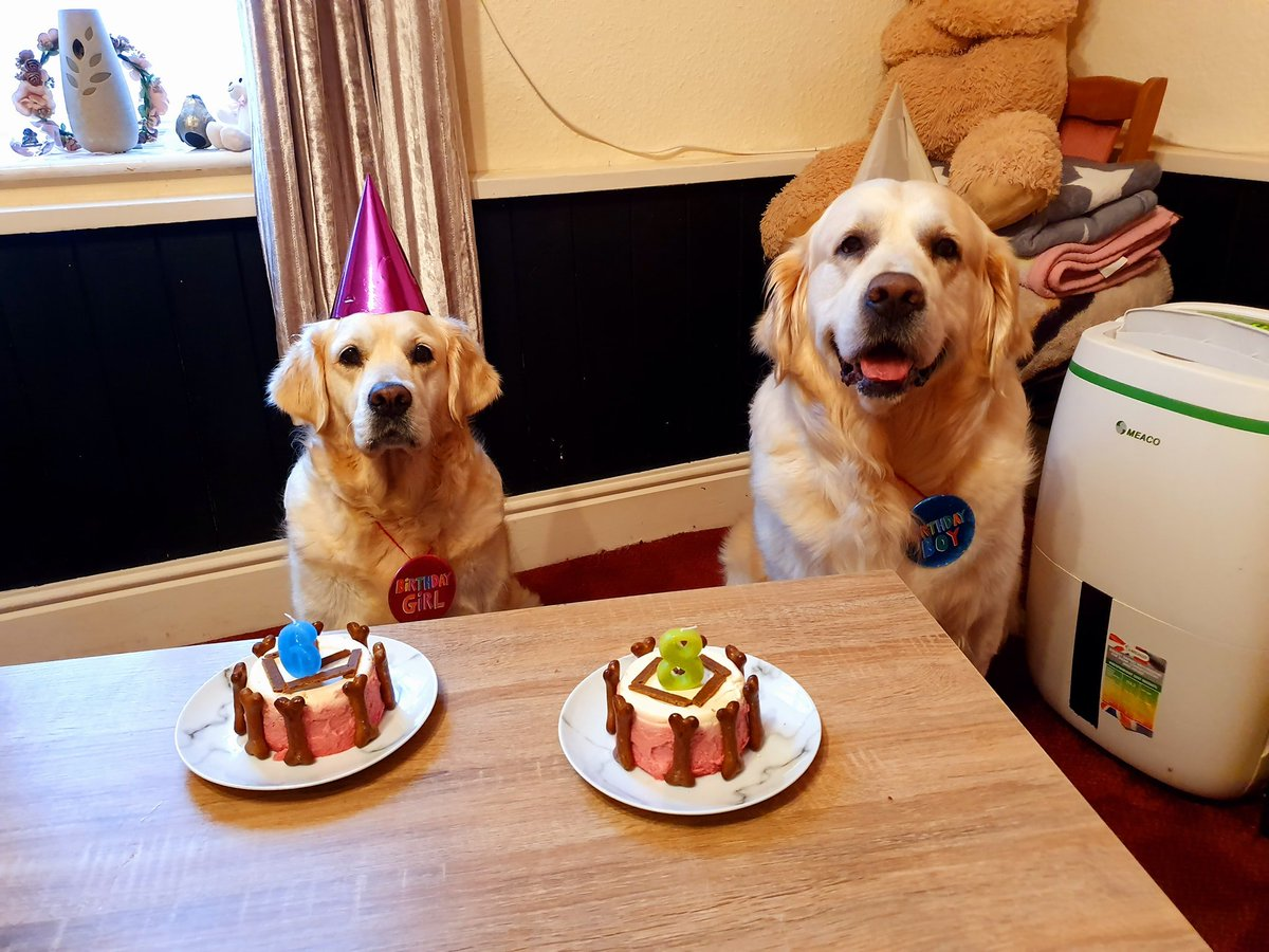 Looks like our Meaco 12L Low Energy #dehumidifier photobombed these adorable dog's birthday snap🎂 @4PawsLover🐶 #dogsoftwitter  #petslove #FridayMotivation