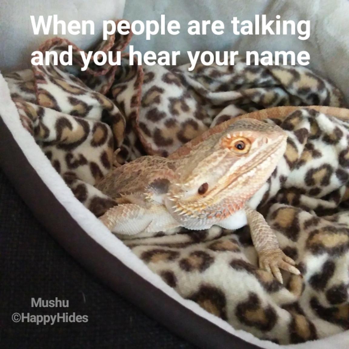 I'll just pretend I'm not listening😳 #WaterCoolerTalk #coworker #Friday #friyay #FridayThoughts #work #fridaymood #HappyHides #beardeddragon #beardeddragons #beardie #beardies #reptile #reptiles #rescue #reptilerescue #rescuelife #thedodo #buzzfeedanimals #animals #animaladdicts