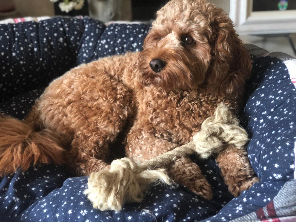 A gorgeous natural #dogtoy made from hemp rope. Once your dog has destroyed their toy the hemp rope will biodegrade. Play time doesn't have to damage the environment. #petboutique #shoponline