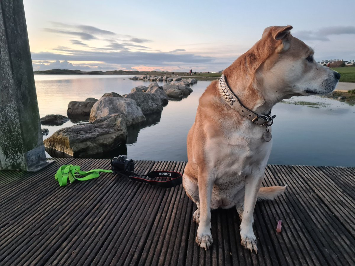 """#BehindtheScenes landscape with the #rescuedog of myself even @DogsTrust loves nothing more than to walk & pose look forward to the """"camera"""" results guys! Shot on my @SamsungMobile with the #canon77D #landscape #photography #freeyourstory #keepitbreif #photographer #dogs #sunset"""