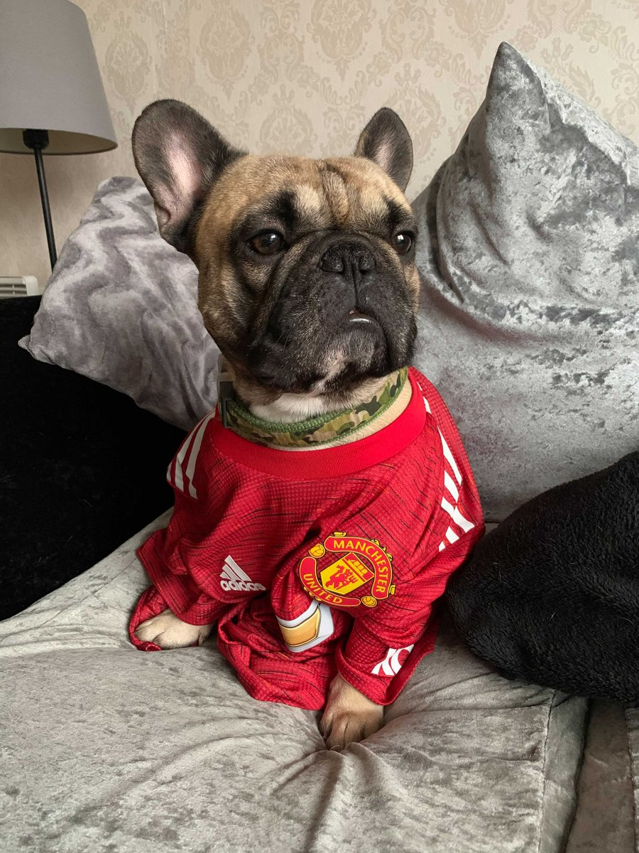 Yes, we might be a little late to the party, but that wasn't going to to stop our staff celebrating yesterday's #dressupyourpetday with a @manutd twist 🔴🐶🐱  #FridayFeeling @dressupyourpets