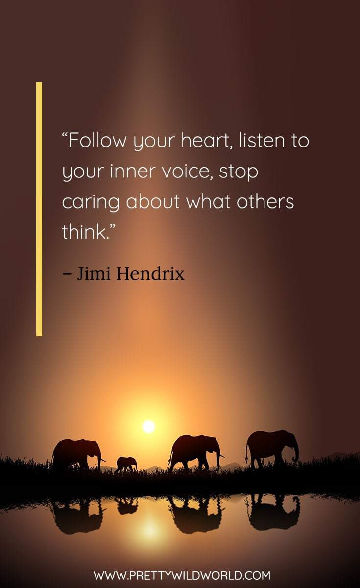 Follow your heart! Drown out the white noise. #FridayFeeling #FridayMotivation
