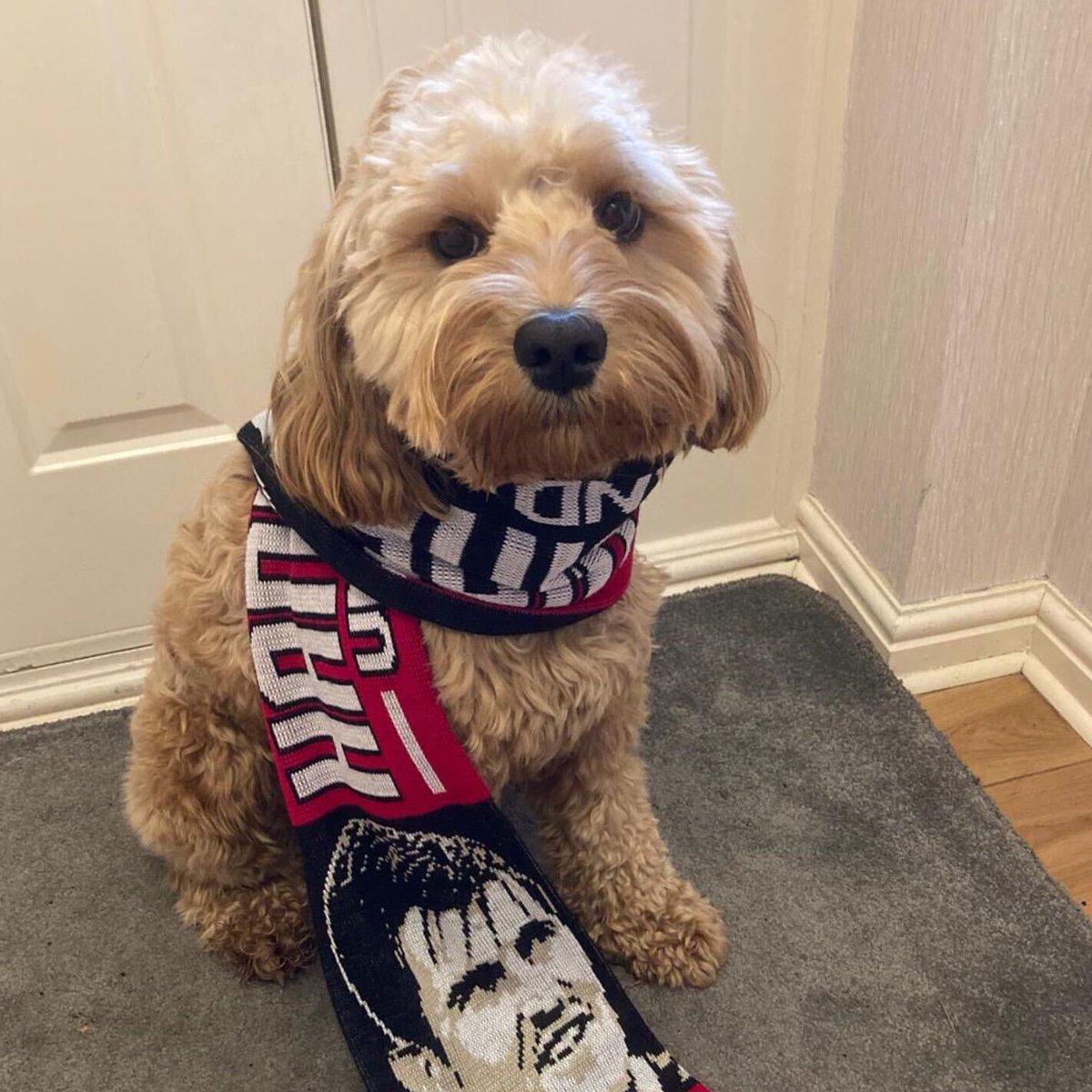 Meet Busby, who is a big @HarryMaguire93 fan ⚽️🐶