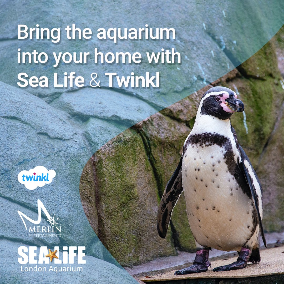 We've teamed up with our friends at @london_aquarium to bring you special lessons from the comfort of your own home. Why not start with this cute penguin lesson >  and use our resources to consolidate learning >