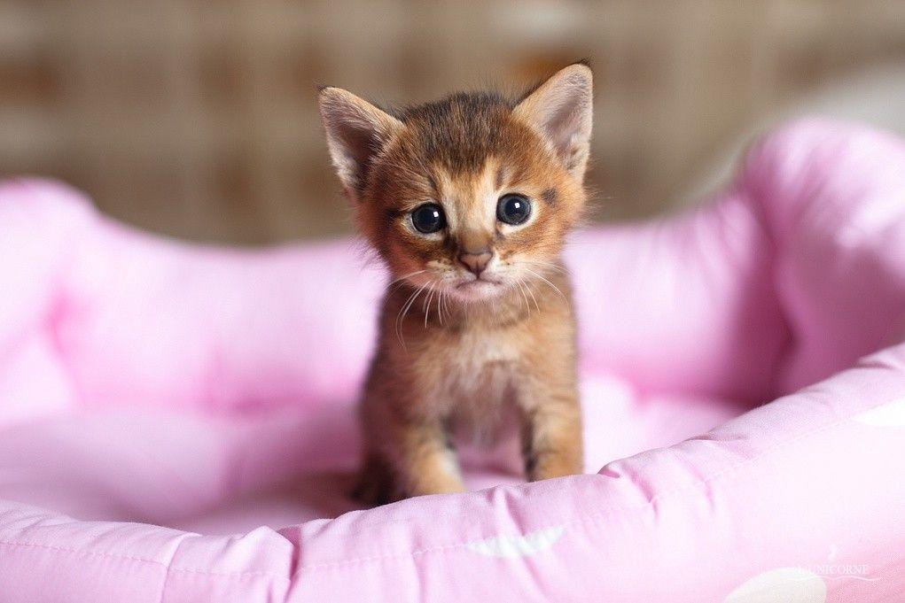 #WandaVision  #FridayMotivation  #AskMewSuppasit  #AskMewSuppasit  #cats   #Catsofinstagram #CatsOfTwitter