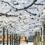 Image for the Tweet beginning: Snow covered trees in Offenburg,