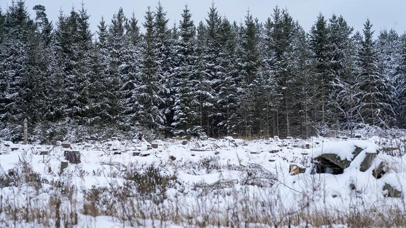 You think money grows on trees? Estonian firm seeks finance from forests https://t.co/K9cIc1VYyQ https://t.co/h0YzJ8aOdL