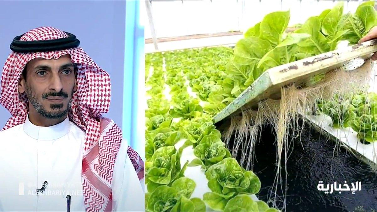 """فيديو   خبير ومستشار زراعي: التربة في #المملكة تربة """"قلوية"""" ولا تسمح بإنتاج المحاصيل بشكل جيد .. والزراعية المائية هي البديل الأفضل   #الإخبارية"""