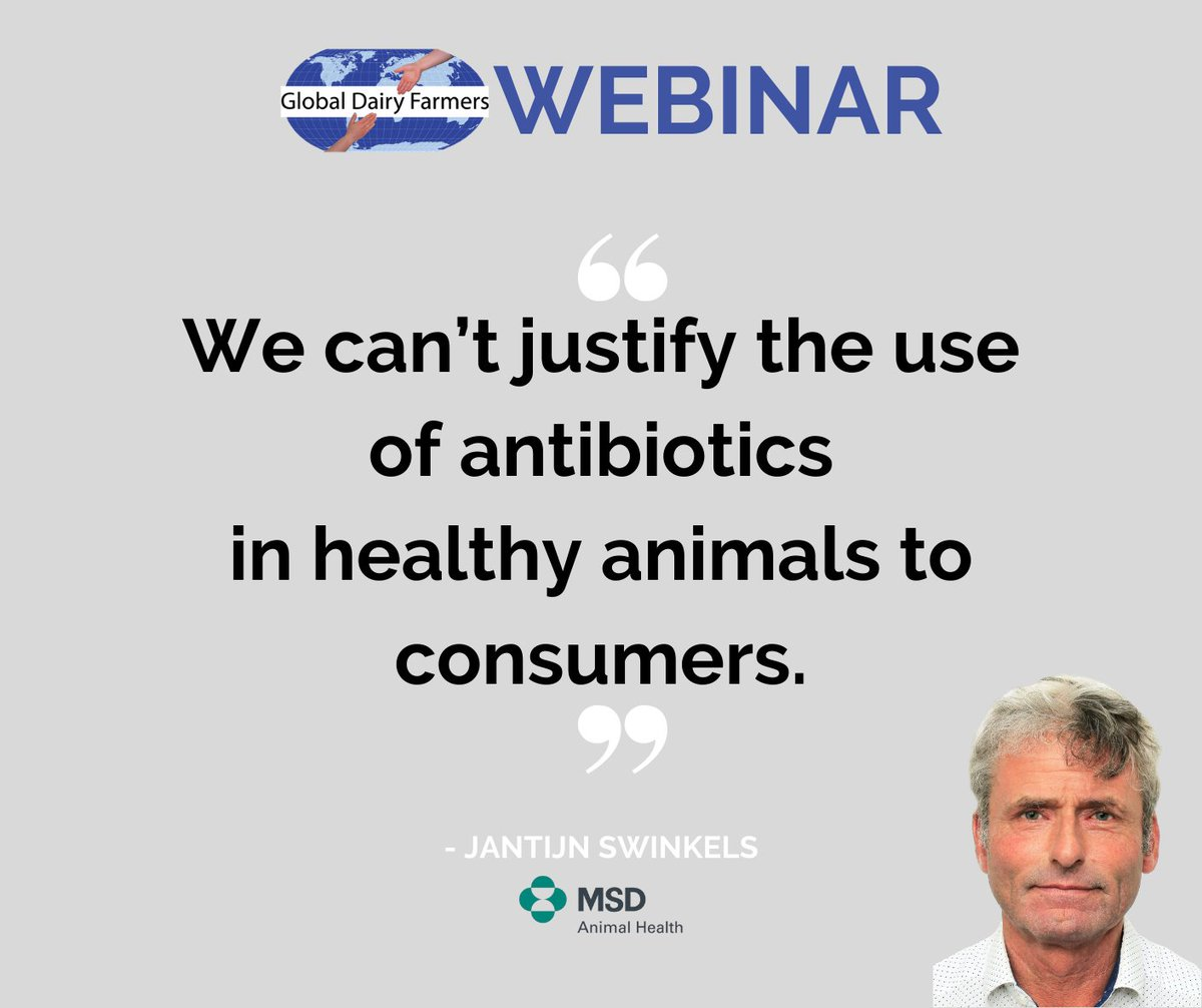 GDF WEBINAR | SELECTION OF COWS FOR ANTIBIOTIC TREATMENT AT DRY OFF Free registration link:  The presentation discusses the why, who and how to implement this approach on your farm. Join us online at January 26th! #dairy #cow #animalhealth #drycow #farmer