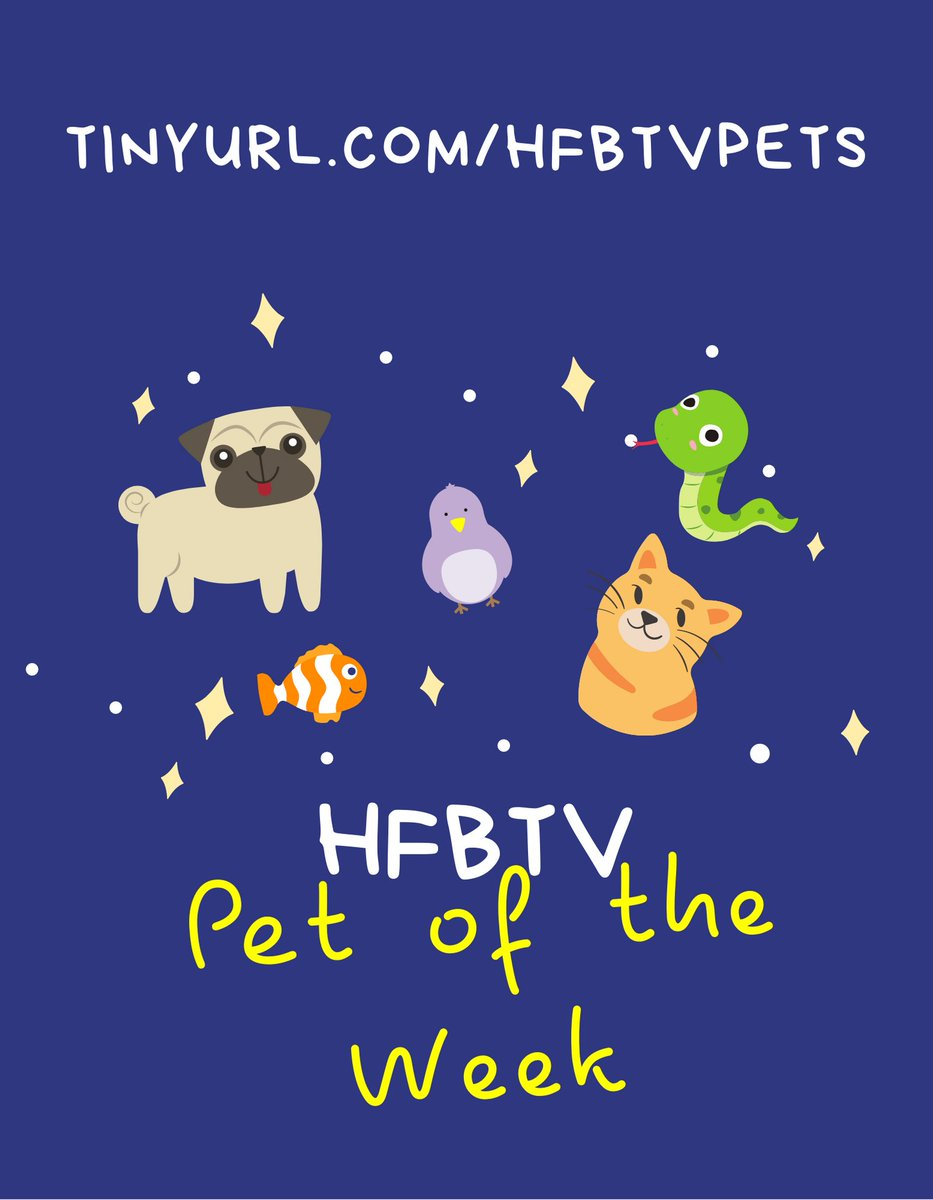 Do you love your pet? Are you part of the <a target='_blank' href='http://twitter.com/HFBAllStars'>@HFBAllStars</a> community? Should your pet be on the school news? Sign up for HFBTV Pet of the Week! This news segment begins next week! <a target='_blank' href='https://t.co/D3LJCZa5Vm'>https://t.co/D3LJCZa5Vm</a> <a target='_blank' href='http://search.twitter.com/search?q=HFBTweets'><a target='_blank' href='https://twitter.com/hashtag/HFBTweets?src=hash'>#HFBTweets</a></a> <a target='_blank' href='https://t.co/8dpDm6uXZf'>https://t.co/8dpDm6uXZf</a>