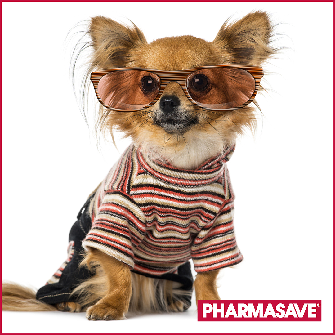 DYK yesterday, Jan. 14 was Happy National Dress-Up-Your-Pet Day? We'd love to see some images of your adorable fur babies! Here's a cutie to help us start. It's okay to dress  up your pet today & share a photo!  #dressup #dressupyourpet #nationaldressupyourpetday #shopthorold