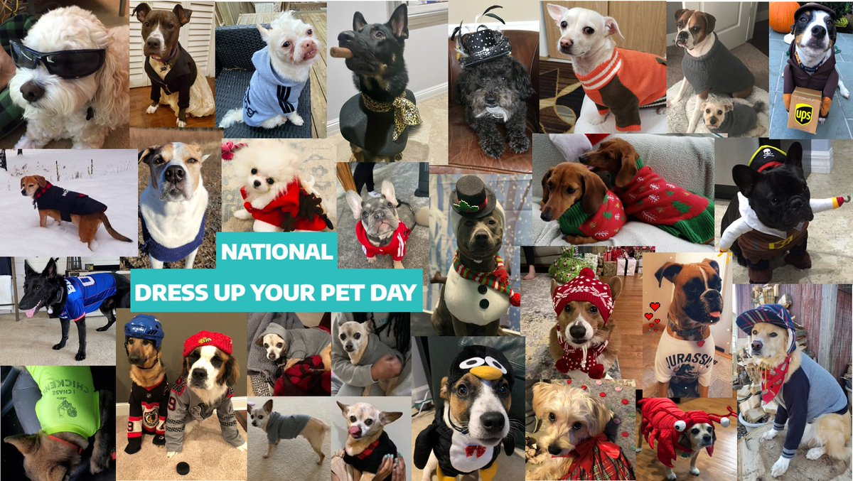 We love our pets here at Iron Bow and so naturally when #NationalDressUpYourPetDay came around, we went all out!   #CompanyCulture #LoveWhereYouWork #GoWithTheBow