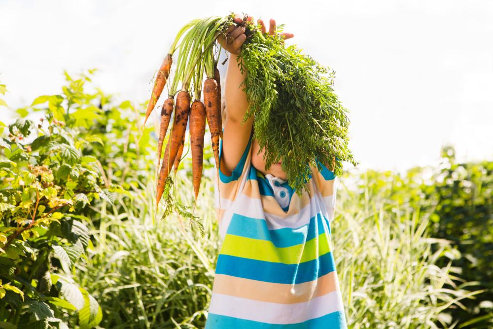Codex Alimentarius - Nya allmänna principer för livsmedelshygien och HACCP https://t.co/JKYLX6beel https://t.co/fWnNdJCBpf