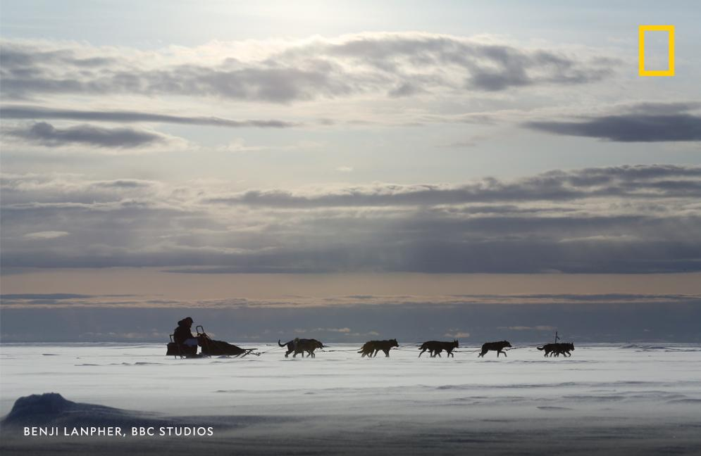 Jessie Holmes crosses the icy tundra as he battles snowy weather conditions along the Iditarod trail. Emmy Award-winning series #LifeBelowZero gives viewers chills as it follows the extreme lifestyles of residents living off the grid in Alaska