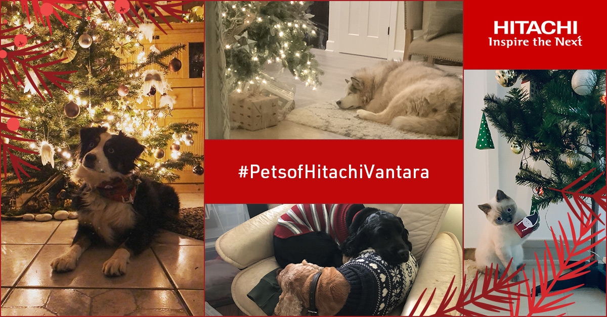 When you're cute like this, it's impossible to get on the naughty list! #HappyHolidays from all of us at Hitachi Vantara.   #PetsofHitachiVantara
