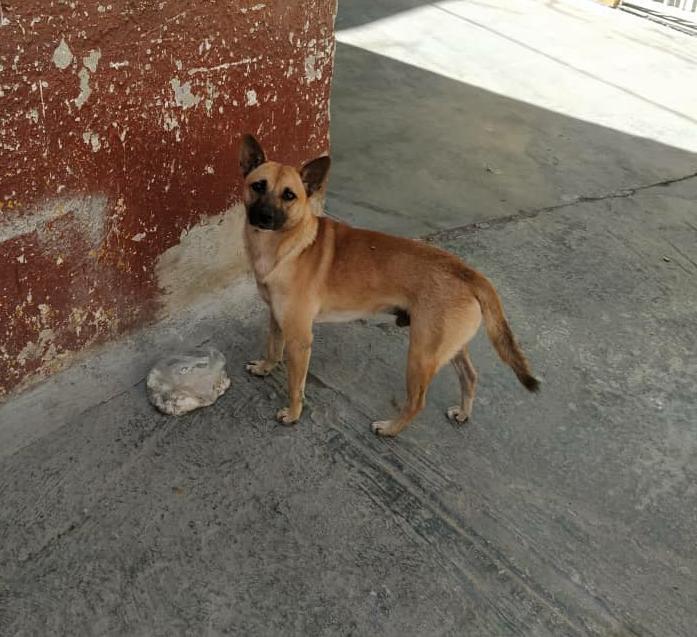 Difundo. Este perrito necesita un  hogar  el es muy nerviosos yo lo alimento ya lo deparacite está en un callejón por la veguita  hay gente que lo maltrata por favor 🙏😞 yo lo llamo chiquito si saben de alguien por favor gracias 🙏 +58 414-1565202 Caracas.