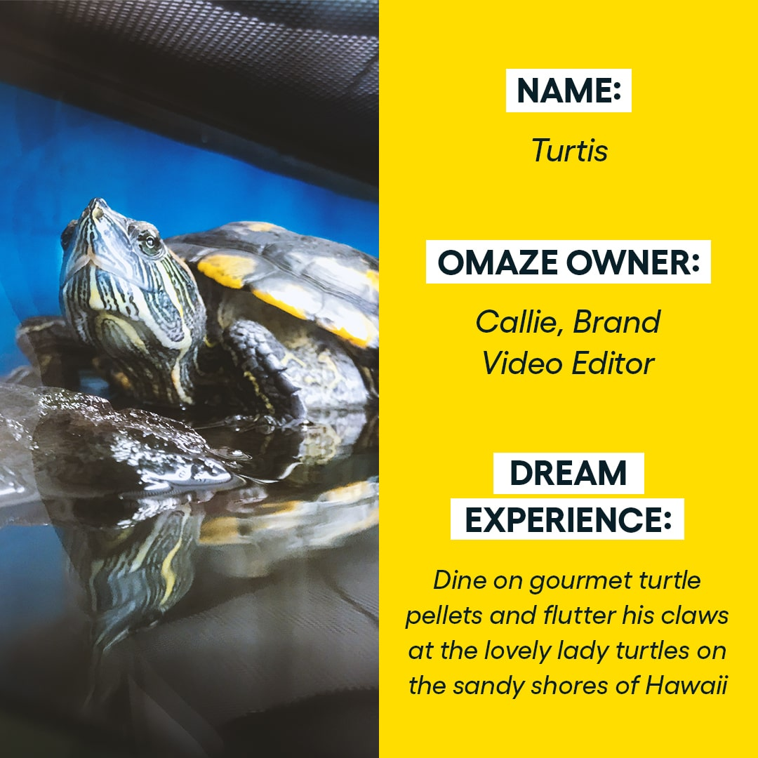 ✨ Just some turtle-y awesome Omaze animals here to bless your feed.✨  #omaze #omazepets