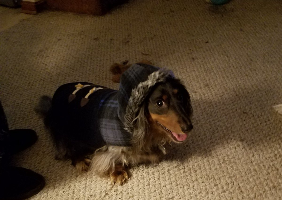 @Purple Henry ready for cold weather #NationalDressUpYourPetDay @Purple #GIVEAWAY