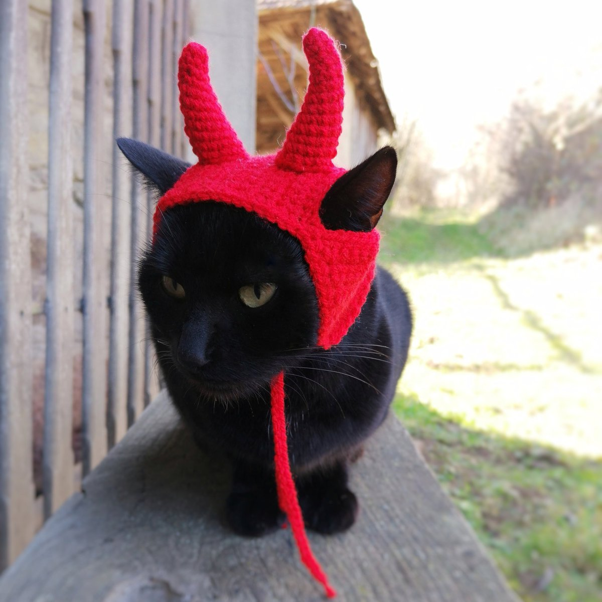 Costume for your cat 🐱 Check out:  🐱🐱🐱🐱🐱🐱🐱🐱🐱 #cats #CatsOfTwitter #pet #dogsoftwitter #nationaldressupyourpetday #TikTok #gatos #PetsAreTheBest #handmade #EtsySocial #etsyfinds #etsy #crafts #HandmadeHour #handmadewithlove #cool