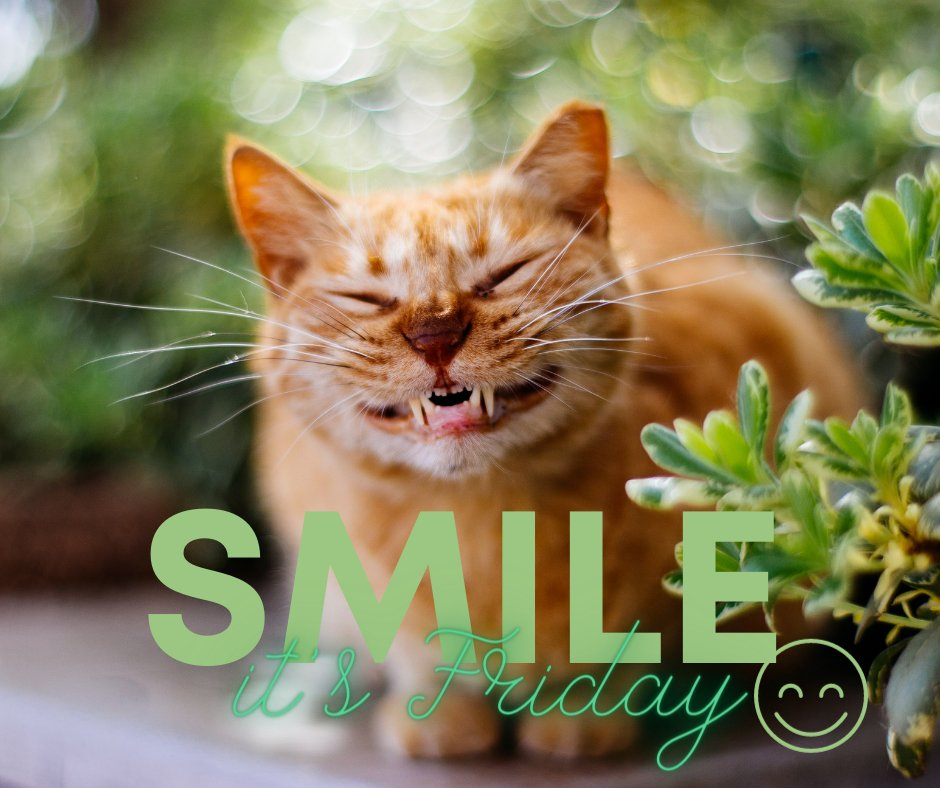 SMILE! It's FRIDAY :)  😄😃😺😸😀🙂😊🙃😎  #Smile #friday #tgif #Fridaylove #FridayAtWork #fridayvibes #Vibes #goodvibesonly #goodvibes #happy #Friends #follow #Family #Goodtimes #MakePlans #Happiness #POTD #Love