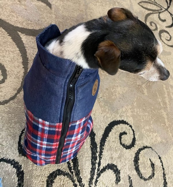 Wessie wanted in on #NationalDressUpYourPetDay ! #dogsoftwitter #dogs #dogsarelove