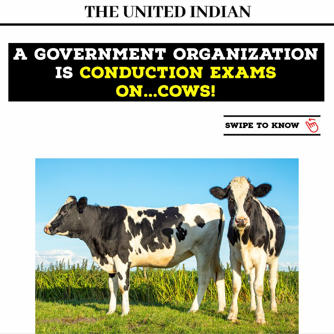 Do you know any interesting facts about cows?   If you do, please tell us in the comments. We found an interesting fact by reading up their reference pdf that….The desi cows are very hygienic.   #government #RKA #RashtriyaKamdhenuAayog #countrywide #examination #gauVigyan #cow
