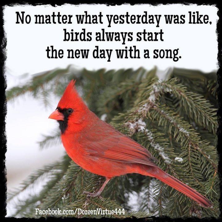Love this for your day. Enjoy! ❤️❤️❤️ . . . #song #newday #enjoy #enjoylife #davisonlupinski https://t.co/WnYdgKls6L
