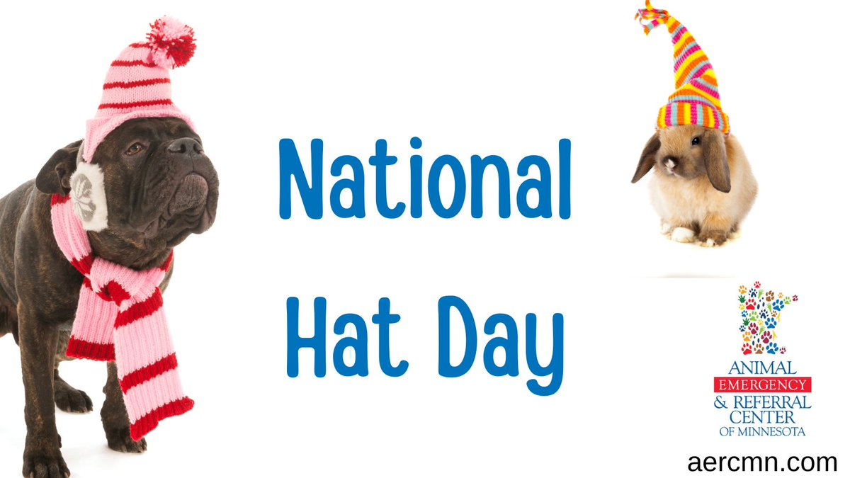 Happy National Hat Day! Does your pet love hats?  #nationalhatday #pets