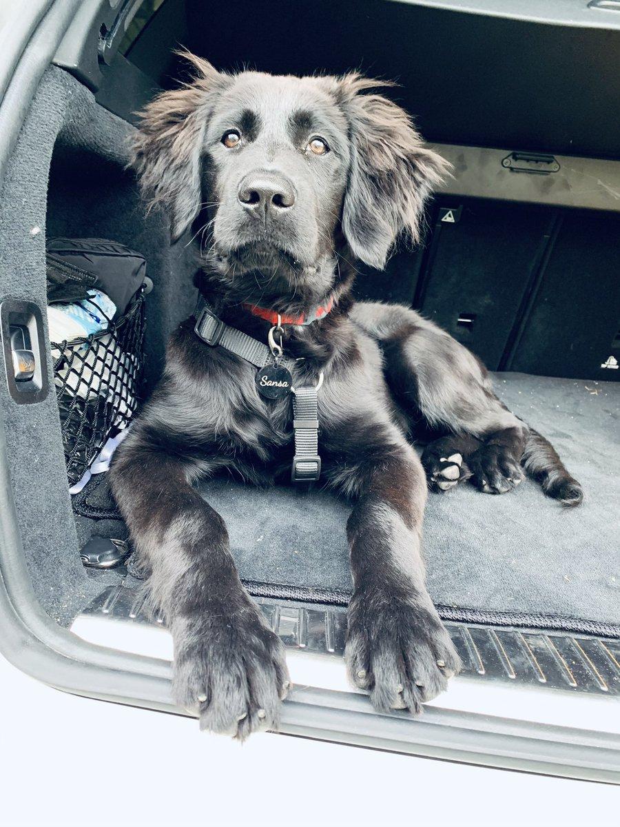 @Markus_Soeder Der Trend zu schwarzen Hunden hält an 😉 Süß, die Kleine. Grüße von unserer hübschen Sansa (6 Monate alt) #wegenmorgen #winteriscoming