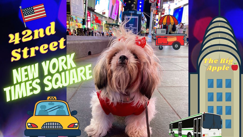 Shih Tzu Puppy First Time Visiting 42nd Street Times Square I New Year 2...  via @YouTube  #dogsoftwitter #NYC #timessquare #dogs #puppy #shihtzu