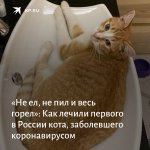 Image for the Tweet beginning: Рыжик – первый в стране