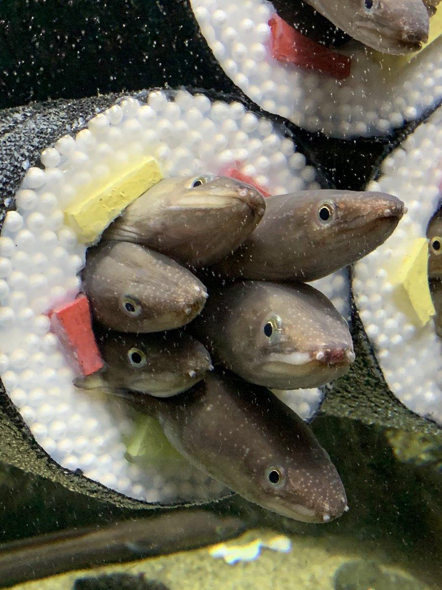仙台うみの杜水族館公式さんの投稿画像