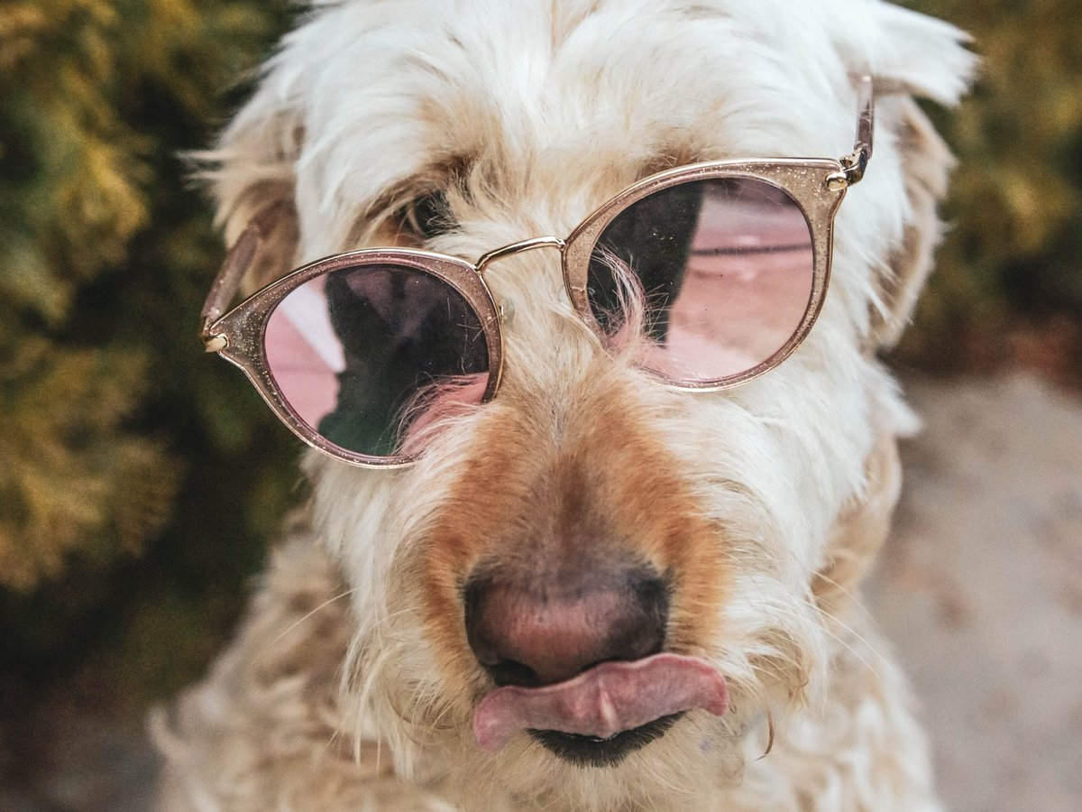 Looks like we actually have some sunshine today 😄! Wishing everyone a safe and happy weekend!  #Weekend #WeekendVibes #TGIF #Humor #Funny #Share #Handyman #Dog #CoolDog #JustForFun