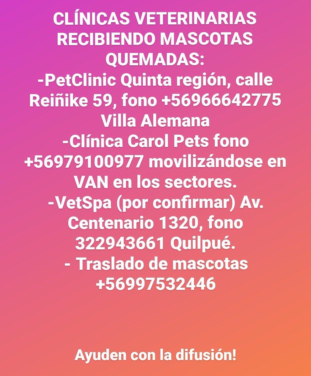 Replying to @bear_ditch: Clínicas veterinarias recibiendo mascotas quemadas: Difundir! #alertaroja #quilpue #IncendioForestal