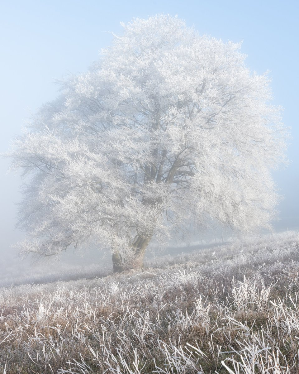 Winter Tree   @Photo4mecom @StormHour @ThePhotoHour #winter #dunstabledowns #chilterns #dunstable