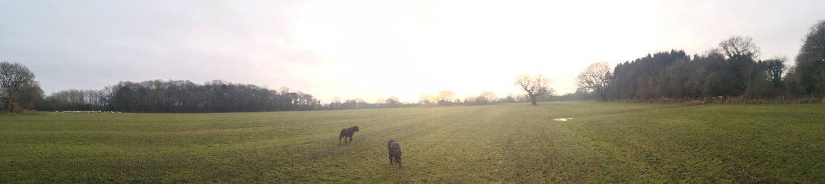 Winter walks with Benny #walkswithbenny #Cheshirelife #WINTER #dogsoftwitter