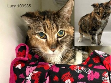 *SHELTER PLEA* Cute Senior Lucy needs her forever home and some medical follow up! Owner is surrendering due to asthma.