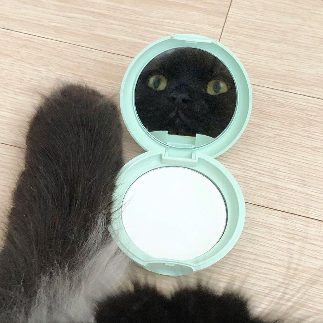 POV: you're a feline feeling himself 😸   https://t.co/OddOYlZT5A https://t.co/trcQB0rE4M