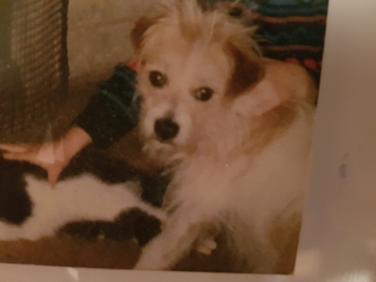 Watching #PoochPerfect, our dog Ben who we had for 18 years, who I still miss, was a bit scruffy like me lol https://t.co/hJmJlsv1aS