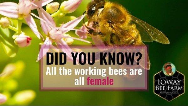 Ioway Bee Farm Iowaybeefarm Twitter